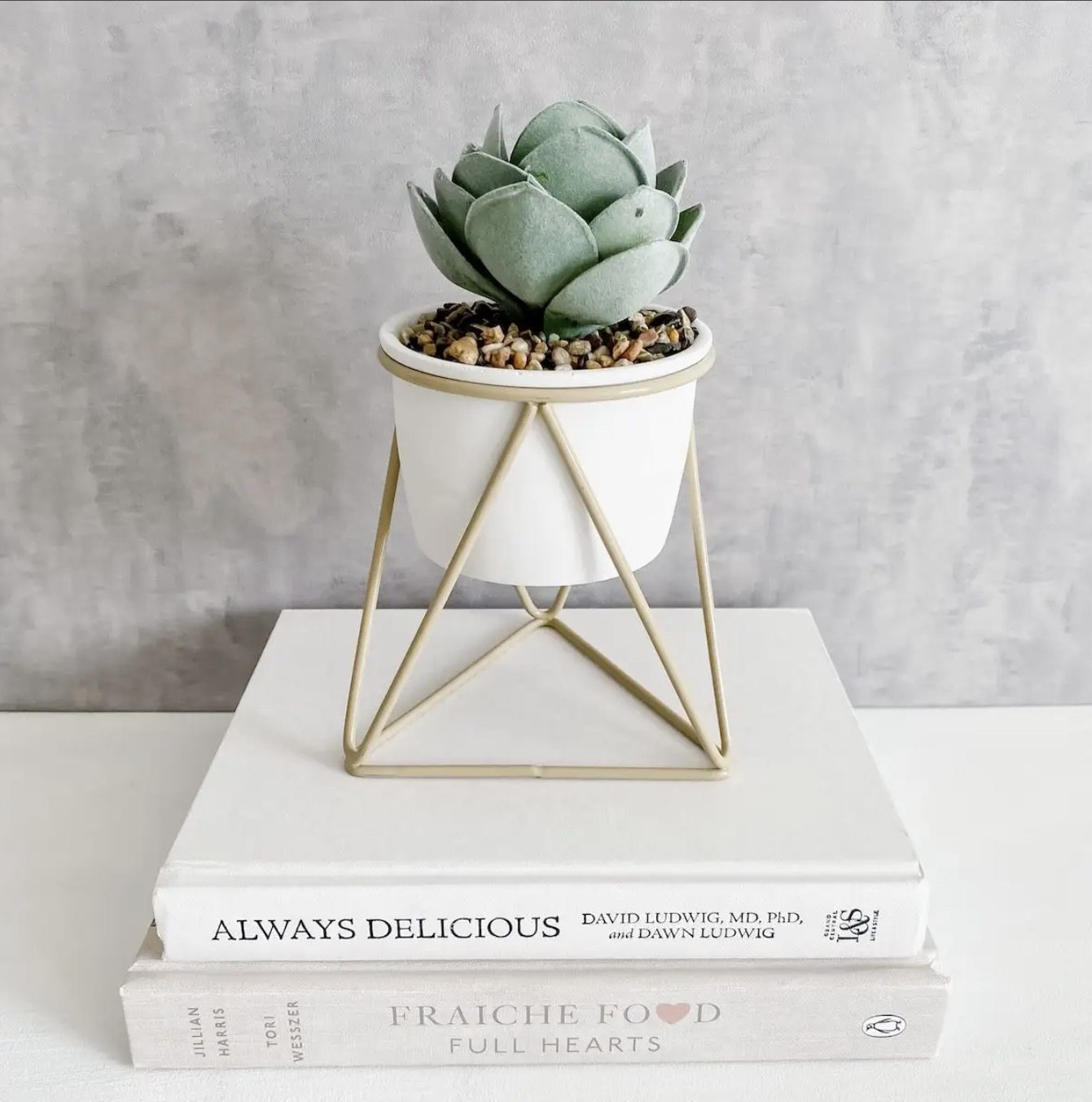 Succulent in pot with metal stand from Linen Chest